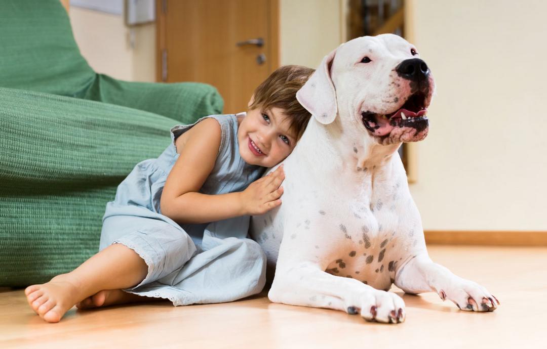 Um pet na pandemia: como os animais de estimação podem ajudar as crianças